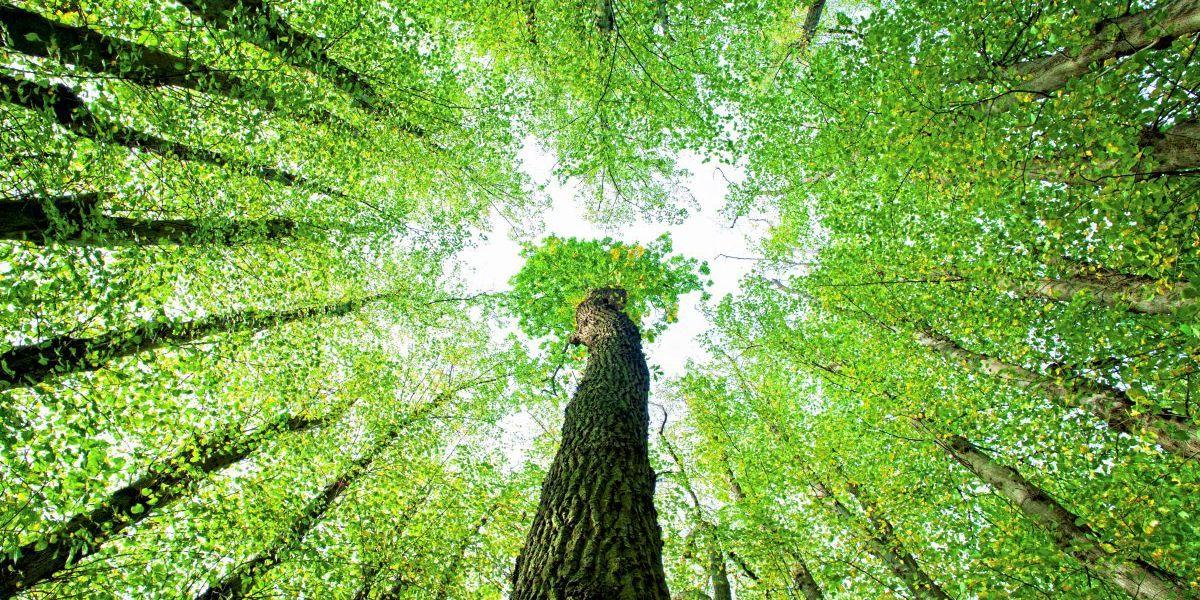 Der Weg zur grünen Wende ist weit