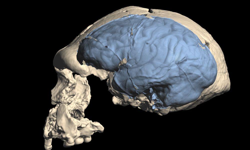 Modernes menschliches Gehirn entstand in Afrika vor rund 1,7 Millionen Jahren