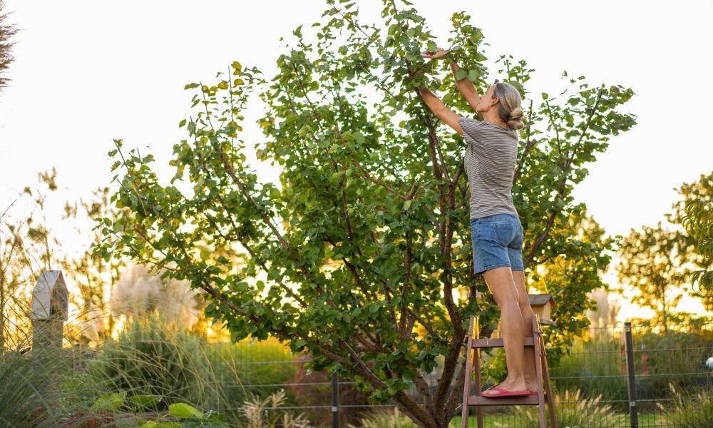 Welche Bäume wachsen in Ihrem Garten?