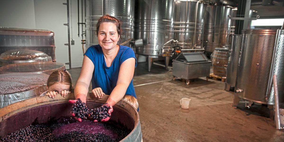 Weißweinsorte neu entdeckt: Die Renaissance des Furmint