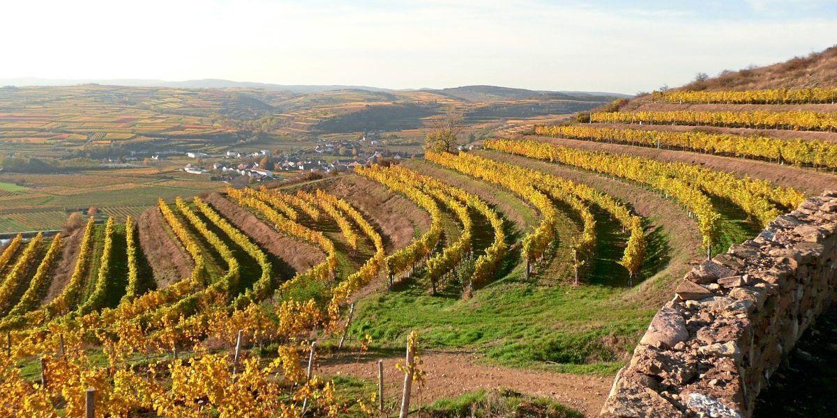Niederösterreich: Herbstliche Weinwanderung im Kamptal