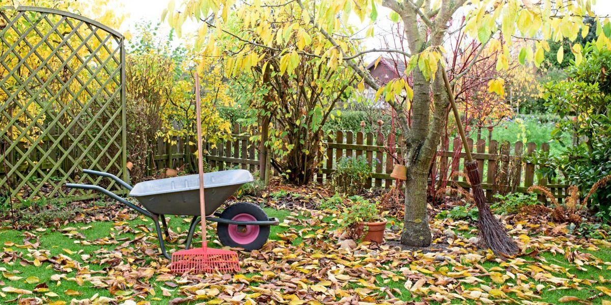 Fit für den Winter: Was jetzt im Garten zu tun ist