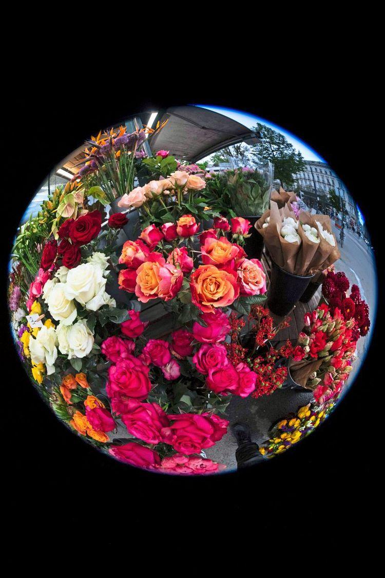 Man seiner viele freundin rosen schenkt wie Rosen: Was